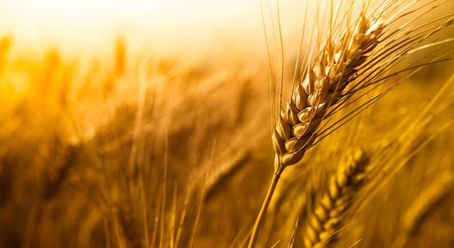 Shavuot – The Feast of Weeks - Jewish Ledger